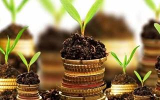 Варианты оплаты земельного налога в 2020 году: величина ставок